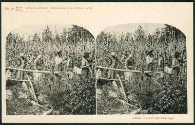 Sklaven auf einer Zuckerrohrplantage in Kuba