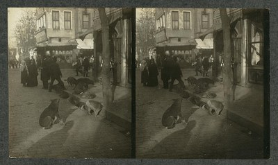 Underwood & Underwood (Fotografen): Dogs choosing their sleeping quarters for the night – Constantinople, Schwarz-Weiß-Photographie, 1911; Bildquelle: Library of Congress Prints and Photographs Division, LC-DIG-ppmsca-05031, http://www.loc.gov/pictures/resource/ppmsca.05031/. Gemeinfrei.